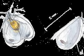 """Aleurode, minuscule petit papillon blanc aussi appelé """"mouche blanche"""". Dérangé, il s'envole comme un confetti ! Le dessous de son abdomen est jaune-orange. / © Laurent Willenegger"""