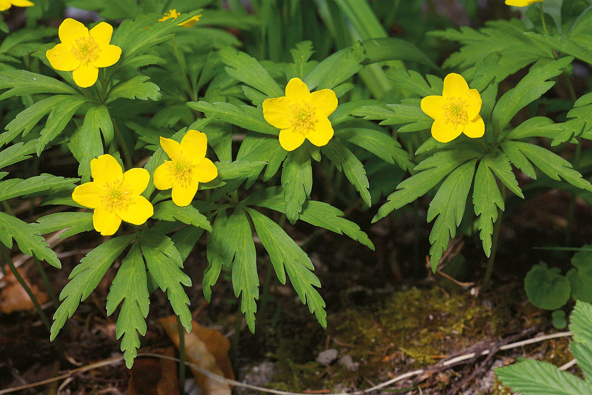 Plantes étonnantes des berges