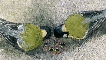 Couple de mésanges charbonnières nourrissant leurs nombreux becs affamés.