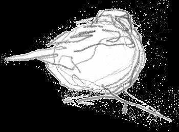 La mésange charbonnière en contrées exotiques