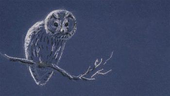 De la tête au bout des plumes, la chouette hulotte est faite pour vivre de nuit.