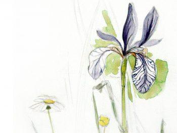 dessin-iris-maeva