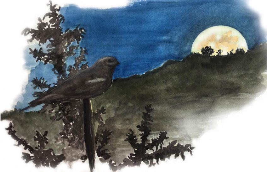 Engoulevent gardien de la lune