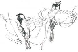 «Au détour d'un bosquet, deux mâles viennent voleter non loin de moi. Ils se tiennent droit pour exhiber leur cravate. Probablement deux individus en limite de territoire, en pleine parade d'intimidation.» / © Denis Clavreul