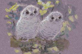 En été, les jeunes hulottes sortent du nid. / © Jean Chevallier