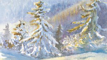 Epicéas recouverts de neige semblent dorés sous le soleil.