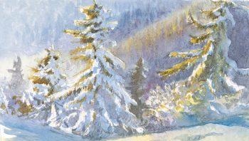 Epicéas sous une bonne couche de neige
