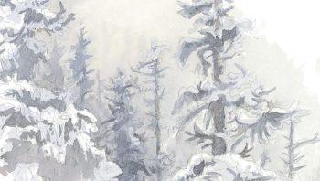 Forêt d'épicéas sous la neige