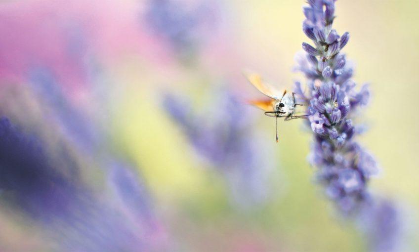 Respirez à plein nez les parfums de la nature