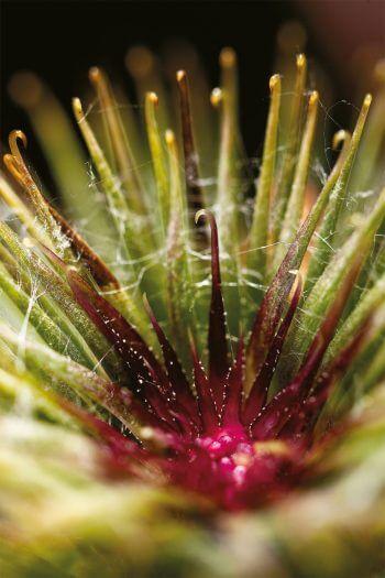 Des toisons à foison: les plantes ont des poils!