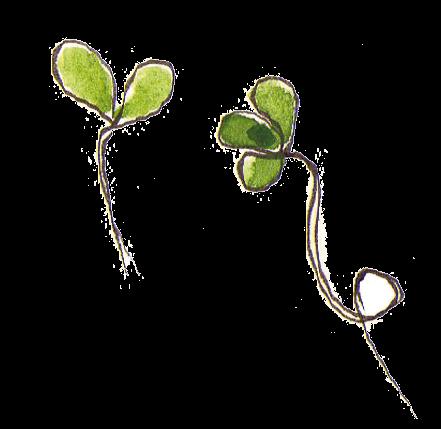 Optez pour les graines germées ! - La Salamandre