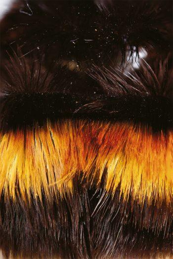 Des poils, même les vers en ont