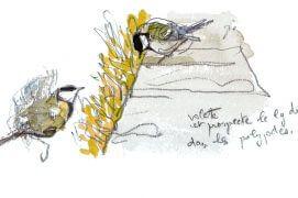 La mésange cahrbonnière de gauche, un mâle, «volette et prospecte le long du muret dans les polypodes.» / © Denis Clavreul