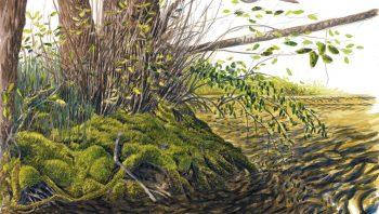 La végétation en bord de rivière…
