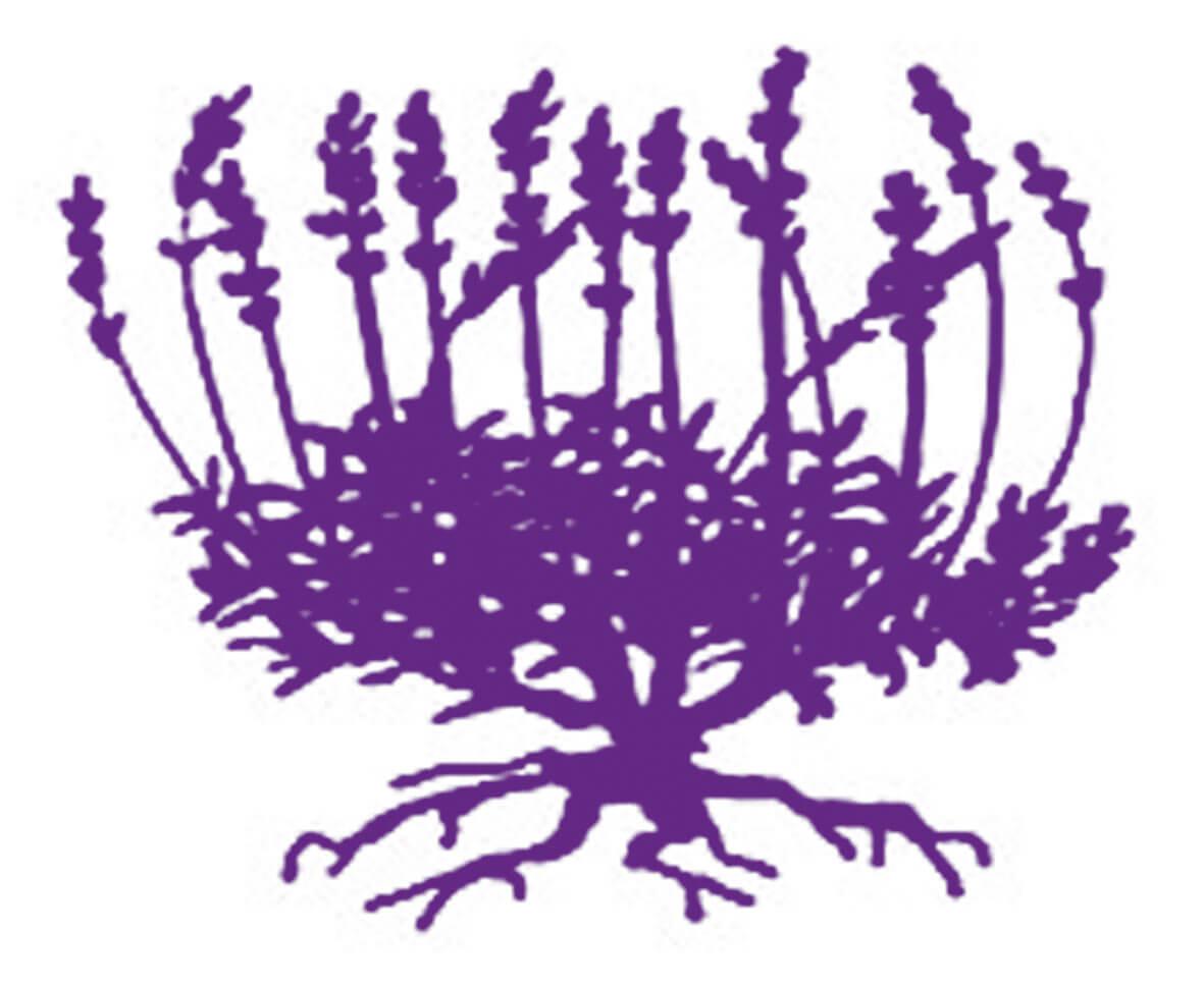 La lavande, plante vagabonde