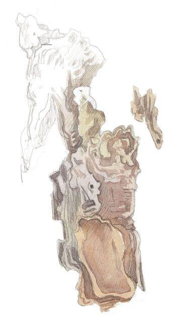 Observer les habitants de l'épicéa