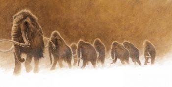 Les courtes défenses de lait, longues de cinq centimètres, tombaient à l'âge de 18 mois. Les défenses définitives des mammouths croissaient ensuite toute la vie. Chez de jeunes mâles en bonne santé, la pousse pouvait atteindre 15 centimètres par an.