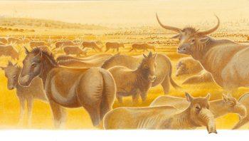 Les herbivores n'exploitaient pas la steppe…