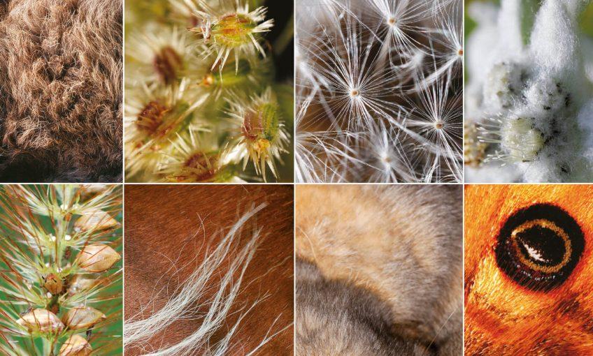 Infos insolites sur les poils : épil'ogue