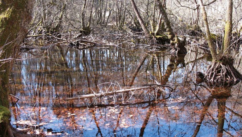 Balade au bois de Chênes de Genolier