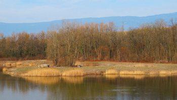 Les Teppes de Verbois et le Moulin Vert sont un îlot de biodiversité et de paix non loin de l'agitation qui règne en ville de Genève.