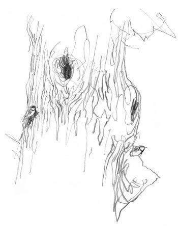 La mésange charbonnière au jardin