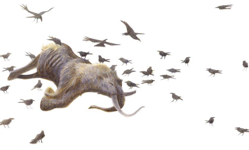 La fin des mammouths