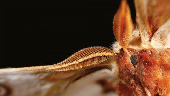 Magnifique mâle de grand paon de…