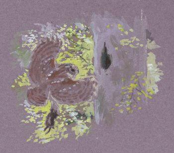 La chouette hulotte au fil des saisons