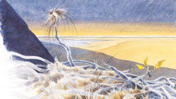 Pour protéger du froid leurs œufs pondus en février ou début mars, les grands corbeaux doublent leur nid d'une épaisse couche de laine. Il y a vingt mille ans, ce duvet protecteur comprenait certainement de longs poils de mammouths.