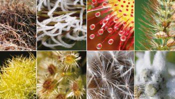 Quelques poils dans le règne végétal…