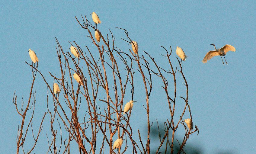 Feuillage de plumes en aigrettes