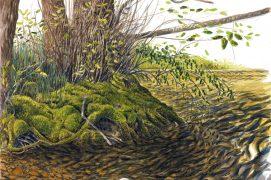 Rivière et sa végétation riveraine / © Jérôme Gremaud