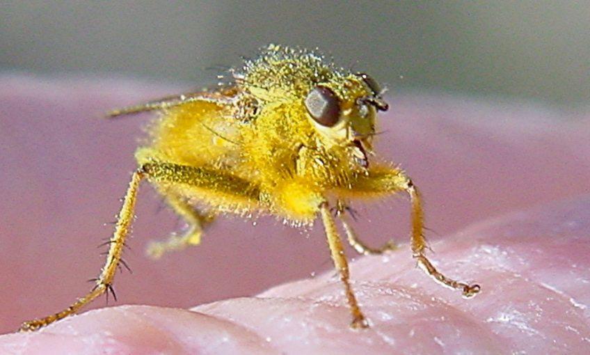 Une mouche en mains propres