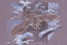 Selon la rigueur des hivers, les hulottes se concentrent à chasser ou se permettent déjà de nicher. / © Jean Chevallier