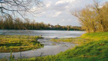 Tandis que la Garonne s'écoule vers l'Atlantique, des poissons migrateurs tels que l'anguille et le saumon font l'exploit de remonter ses eaux, au-delà du Confluent.