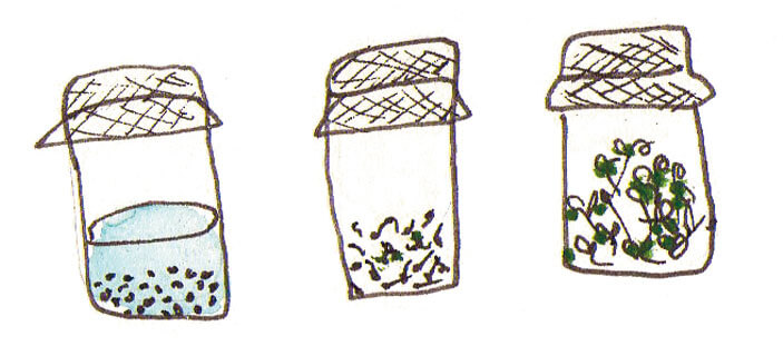 Optez pour les graines germées !