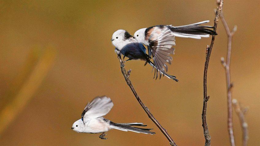 WikiLeaks ornithologiques