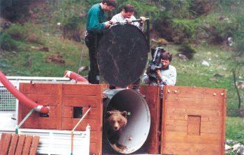 18 mai 2000. Daniza est libérée en plein jour. Depuis lors, cette ourse a élevé neuf oursons.
