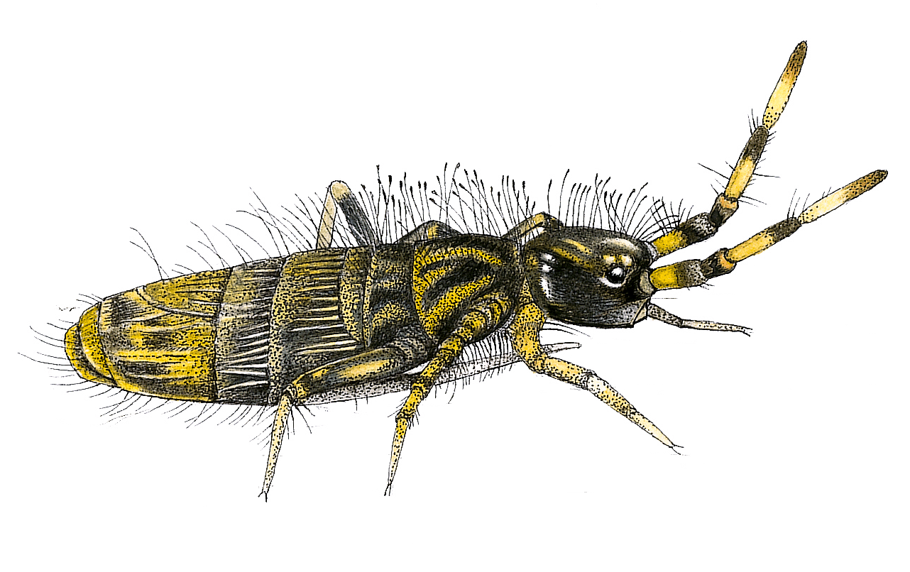 Recherche du tardigrade: la traversée des mousses