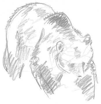 L' ours, un animal diabolisé