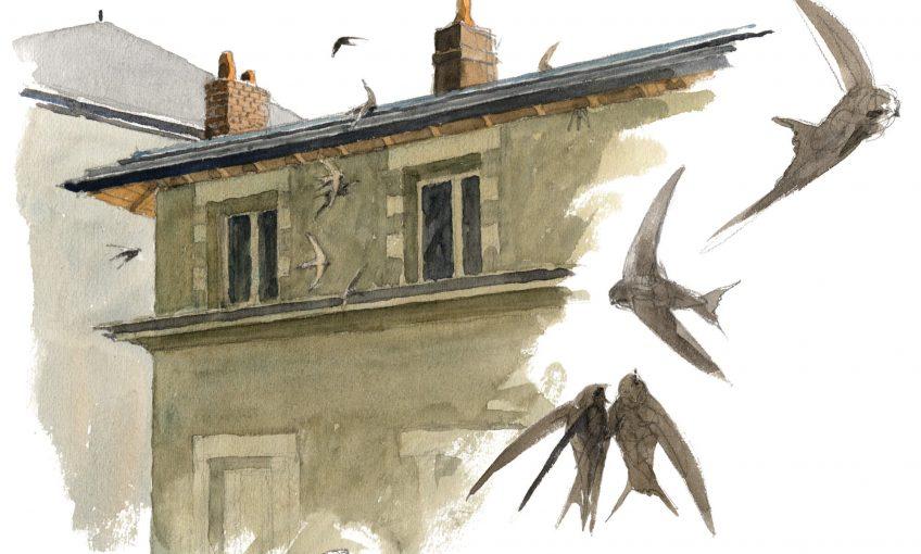 Martinets noirs par Denis Clavreul