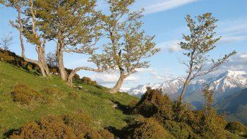 La présence de l'ours dans les Pyrénées n'enchante pas tout le monde.
