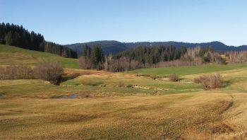 Les travaux de régénération du marais du Rothenthurm ont enfin démarré en 2005.