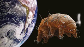 S'il est difficile d'exclure formellement une origine extraterrestre de la vie sur Terre, il est en revanche certain que les tardigrades ont leur place dans l'évolution: ces étranges organismes n'ont pas colonisé séparément notre planète!