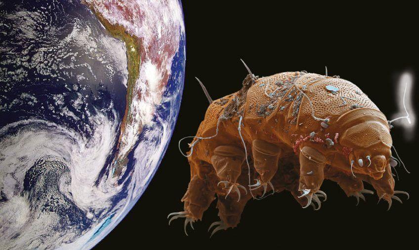 Tardigrades en voyage dans le cosmos