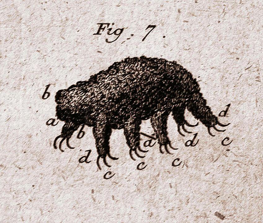 Le tardigrade: ours, sphinx ou paresseux?