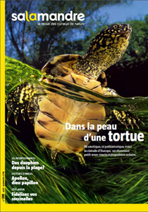 Salamandre 235 tortue - Julien Perrot