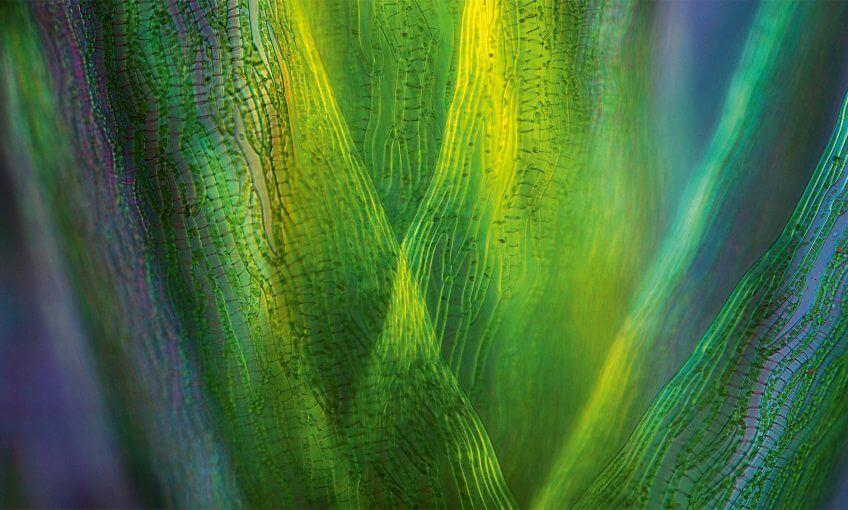 Dossier complet sur le vert, couleur de la vie dans la nature