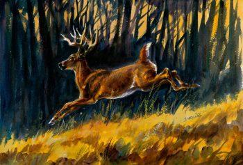 Cerf de Virginie - Acrylique sur papier aquarelle / 29,5 x 42 cm
